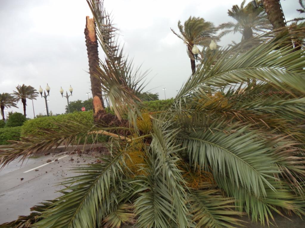 Same palm tree different angle.